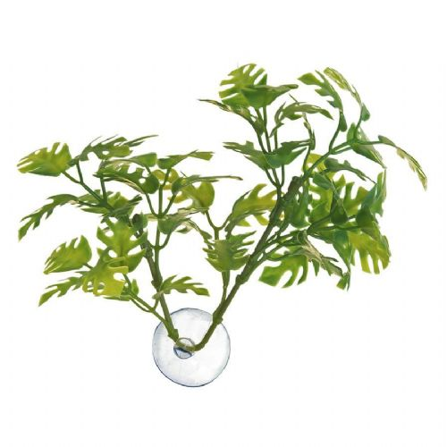 ZM Betta Plant Window Leaf, BP-25
